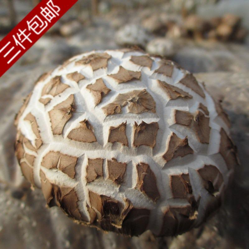 花菇干货三件包邮出口级特产特价剪腿香菇冬菇蘑菇农家自产销厚嫩
