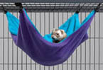 American mink cage Chinchilla cage Western MIDWEST FN CN fleece hammock hammock toy animals