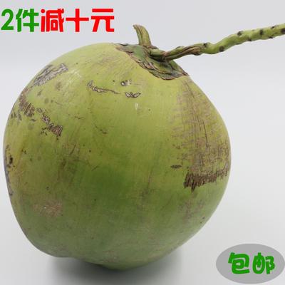 【6个大果】海南热带特产新鲜水果椰子椰青椰皇毛椰新鲜包邮
