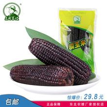 非转基因10根东北农嫂黑糯玉米新鲜嫩甜黏黑玉米棒零食苞米真空装