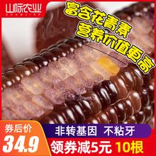 东北玉米新鲜黑糯玉米棒整箱甜糯米玉米棒真空袋装非转基因2020年