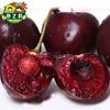 智利进口黑珍珠智利车厘子1磅甜脆大樱桃新鲜水果第二件1元