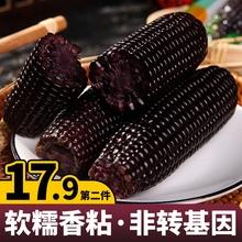 东北黑糯玉米即食新鲜现摘黏粘紫甜玉米棒粒真空装包非转基因糯米