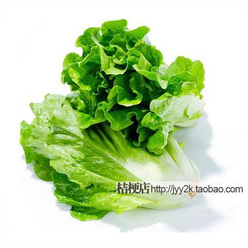 奶油生菜种子 花叶生菜 叶用莴苣 阳台蔬菜种子 口感好发芽率高图片