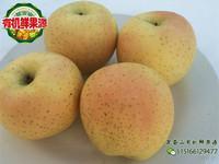 【鲜果源】有机甜脆黄金王林苹果80-85#老品种孕宝水果净10斤包邮