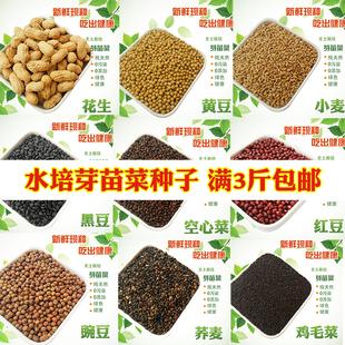 纸上种菜芽苗菜种子水培 豌豆荞小麦松柳油葵黑豆萝卜绿豆空心菜
