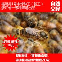 福赐德1号中蜂蜂王澳门十大正规赌博平台交尾2016年新蜂王土蜂种王抗病高产较耐热