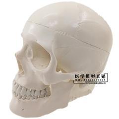 人体头颅骨模型绘画美术素描教学仿真头骨标本模型仿真骷髅头标本
