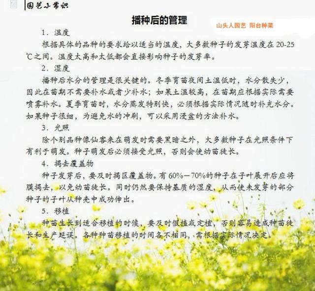 阳台种菜的种植方法 - 墨舞斋主人 - 墨舞网易