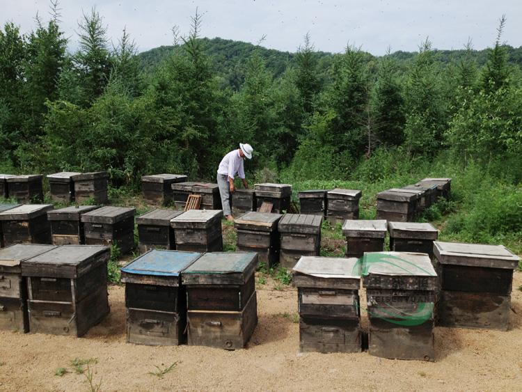 [黑森源] 东北椴树原蜜 纯天然野生椴树白蜜 椴树雪蜜 蜂蜜 批发图片_9