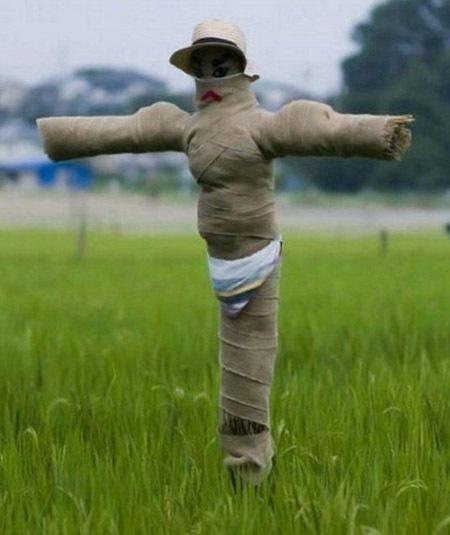 蒙面的稻草人,肯定会保卫稻田的安全被小鸟破坏的。